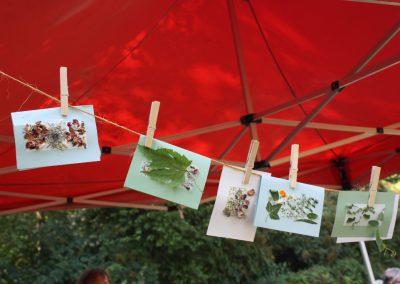 Naturpostkarten