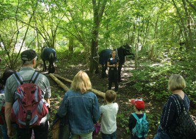 Holzrrücken im Wald 2