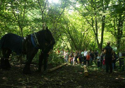 Holzrücken im Wald 1