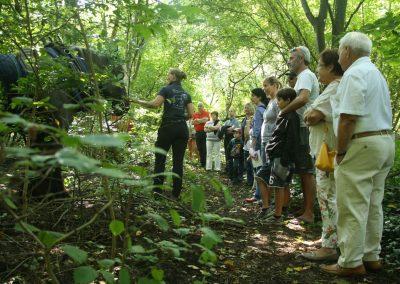 Holzrücken im Wald 3