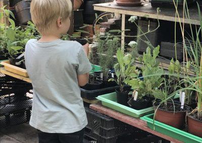 Pflanzenboerse