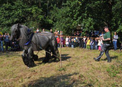 zwei Pferde, viele Zuschauer