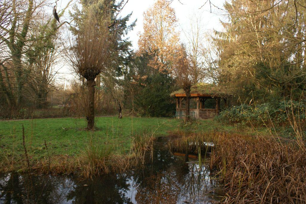 Teich, Herbst (2)