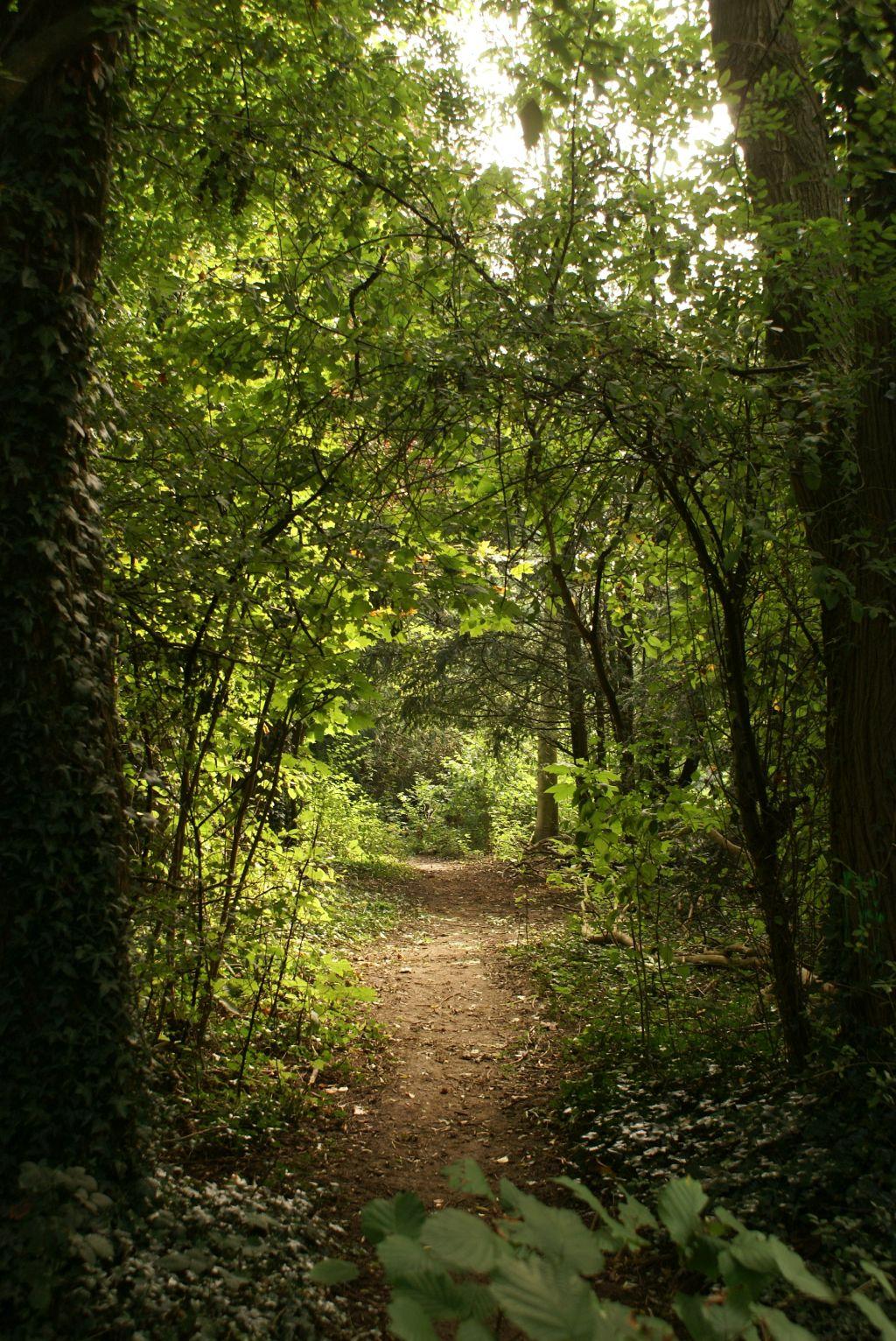 Waldweg, schmal