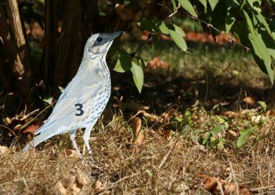 04 - Heute sind die Vögel nummeriert
