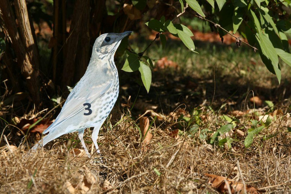 Heute sind die Vögel nummeriert