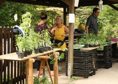 20 - Die Pflanzenbörse bot reichlich Jungpflanzen aus eigener Anzucht