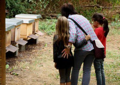 25 - Vorsichtig schauen bei den Bienenstöcken des Imkervereins