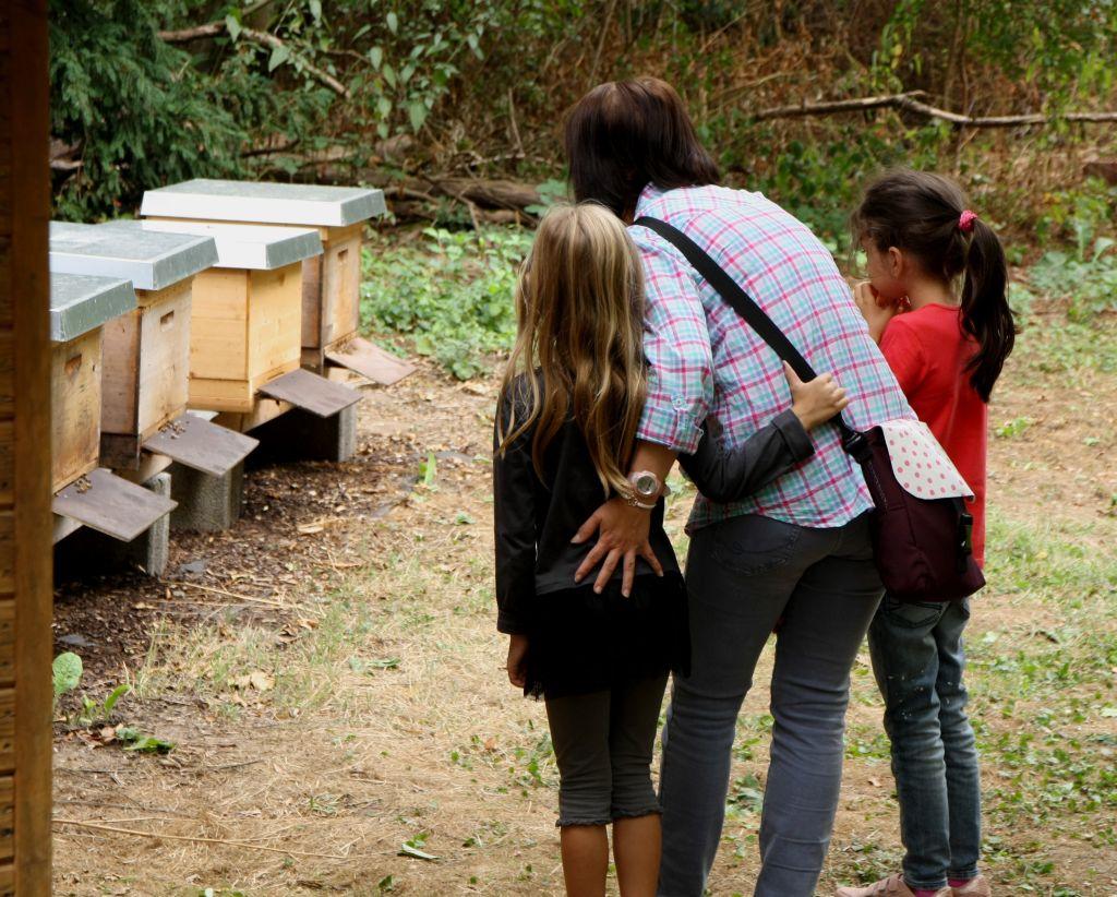 Vorsichtig schauen bei den Bienenstöcken des Imkervereins