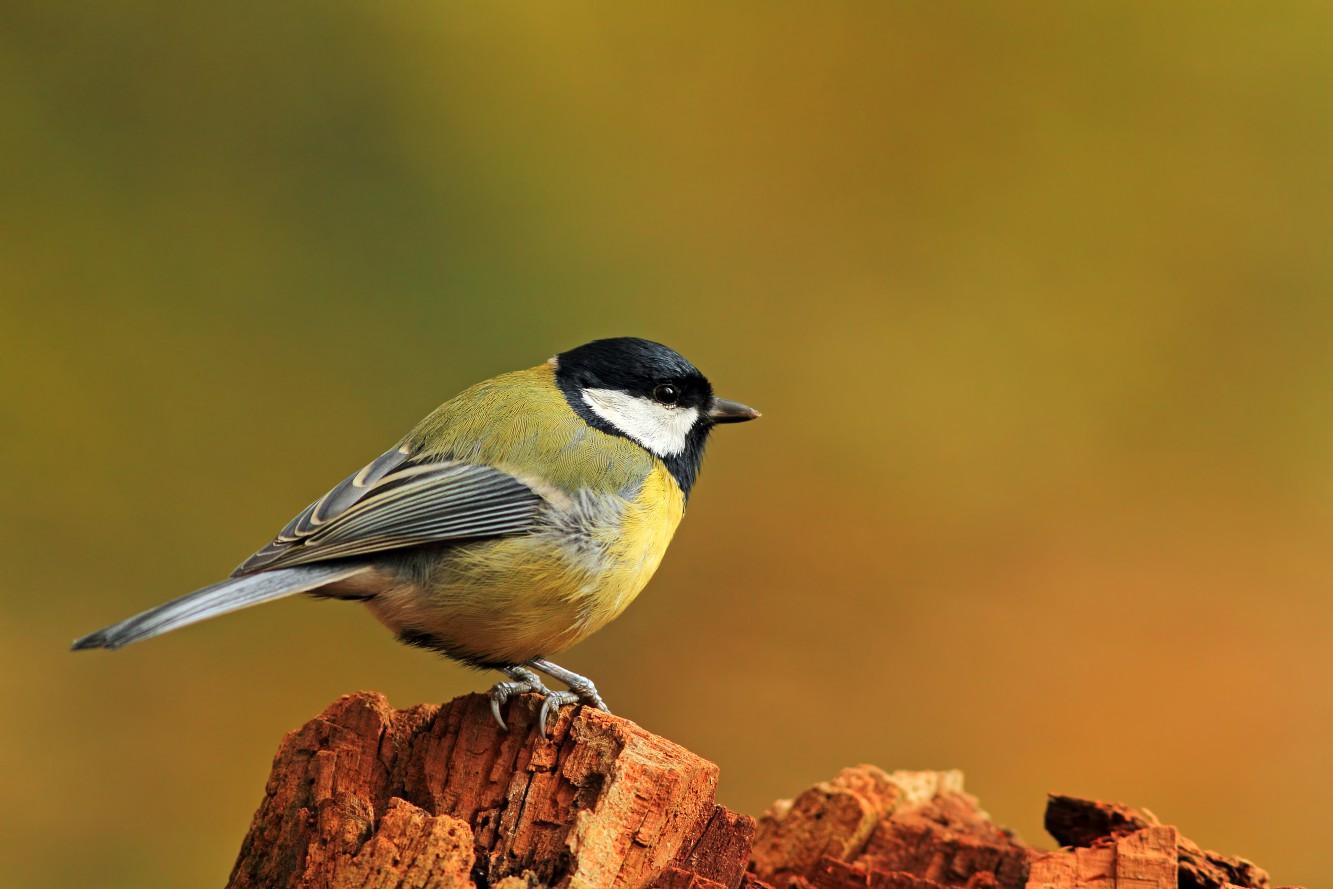 Vogelstimmenführung für Kinder und Erwachsene
