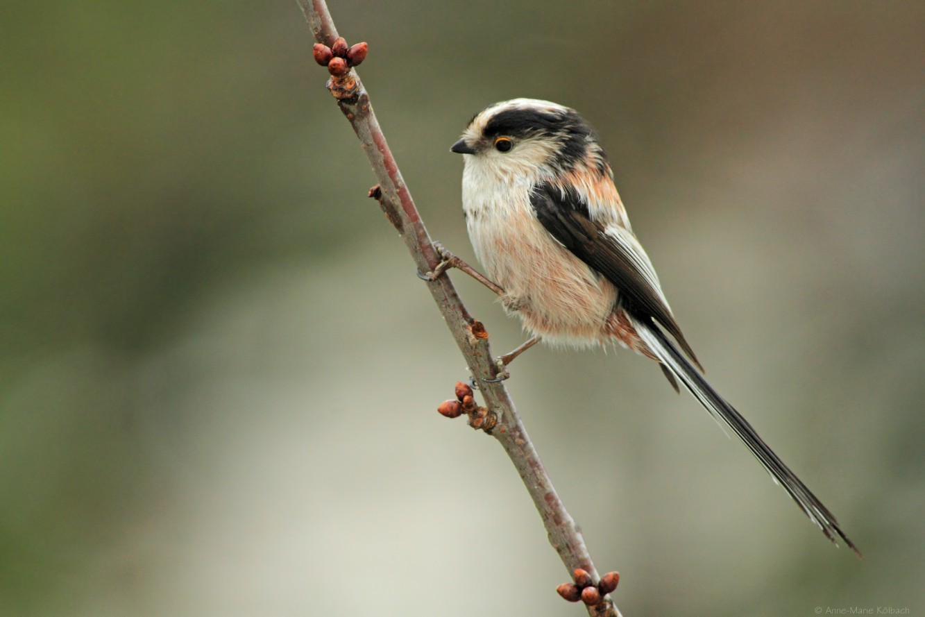 Vogelstimmen-Tour für Kinder mit ihren Eltern