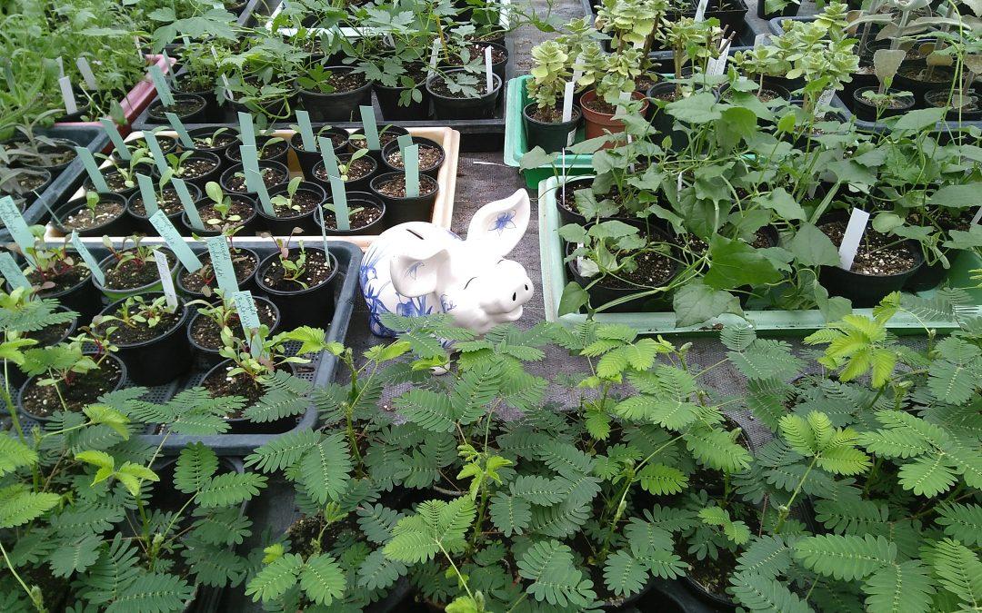 Gemüse-, Blumen- oder Duftpflanzen-Nachwuchs