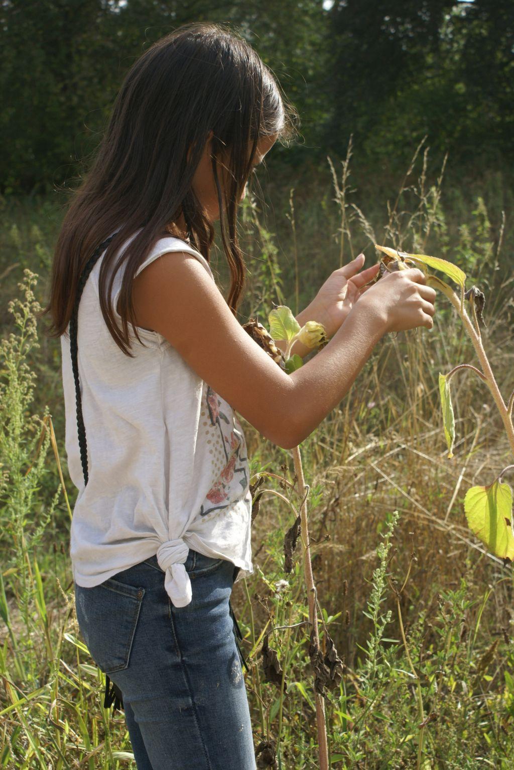 Sonnenblumenkerne finden