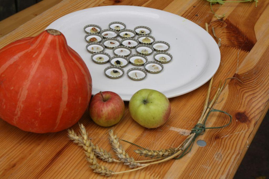 Samenmemory - welche Frucht gehört zu welchem Korn