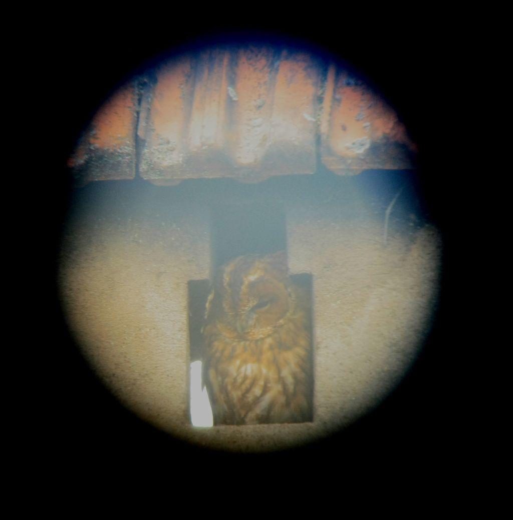 und Walburga Waldkauz schaut vom Schornstein aus zu