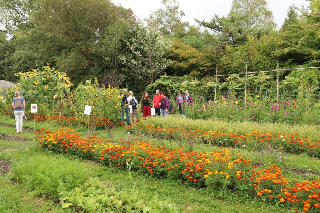 Gemüse- und Blumengarten des Kolping-Bildungswerkes